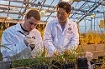 Biology faculty member working with a student in the greenhouse.